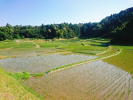 [令和元年産]千葉県大網白里市かやの地区産 コシヒカリ5kg×2袋