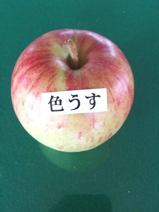 津軽産「家庭用」りんご見た目より味!!(約16kg)