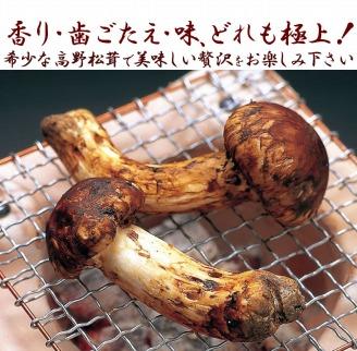 希少な国産松茸「高野松茸」200g 香り・歯応え・味ともに最高級!【化粧箱入】★10月10日まで★