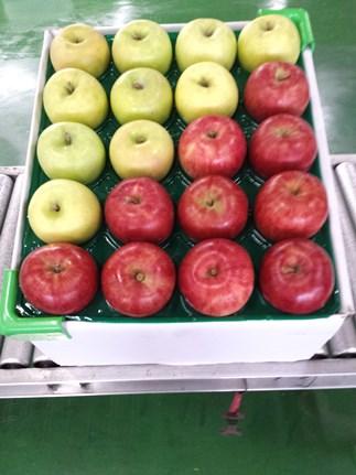 津軽産(紅白)りんごサンふじ、王林他約5kg(18玉~23玉)
