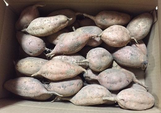 永濱農園 種子島産安納芋10㎏