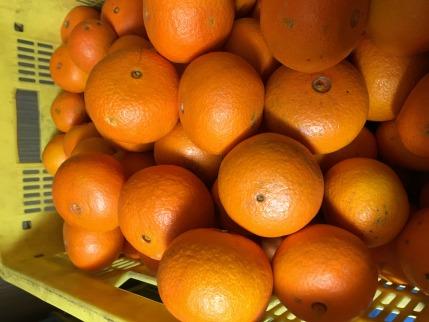 【2021年2月中旬以降出荷】果汁たっぷり!とってもジューシーな希少春柑橘『津之輝(つのかがやき)』約5kg
