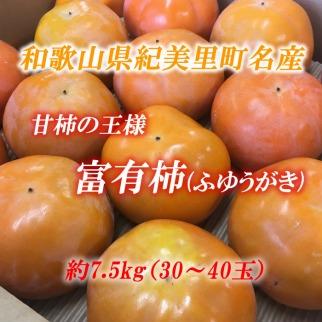 ■[11月中旬より順次発送]和歌山県紀美野町産富有柿約7.5kg(30~40玉)