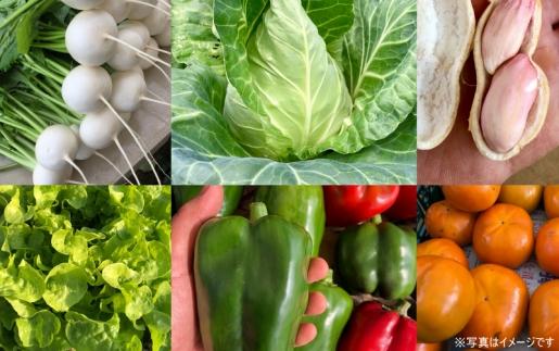 【ポイント交換専用】初夏の採りたて野菜直送セット