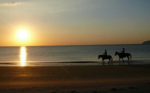 究極の癒し波音を聞きながら乗馬体験ペア