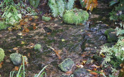 ★受付終了★【名水百選】竜ヶ窪の天然水500ml×24本セット