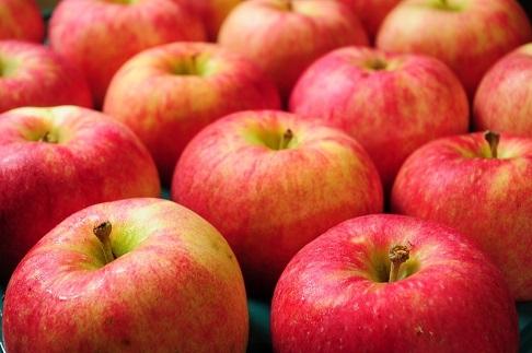 青森県特別栽培農産物家庭用りんご約5kg