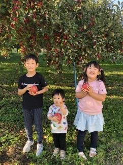 青森県特別栽培農産物認証農園3種のリンゴジュース1L×6本
