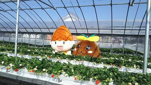 【農家直送】プレミア和歌山認定「毬姫様」9粒または12粒