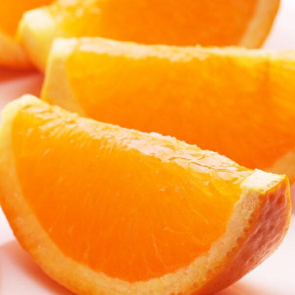 ■<4月発送>樹上完熟清見オレンジ5kg