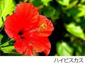 【那覇市】JTBふるさと納税旅行クーポン(30,000円分)