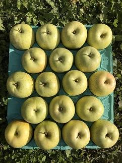 本年度最終!!りんごの王様!黄色系の最高峰 王林 訳アリ10kg