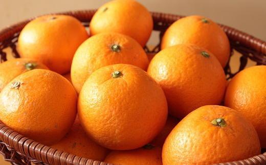 [厳選]有田産清見オレンジ約5kg(サイズおまかせ・秀品)