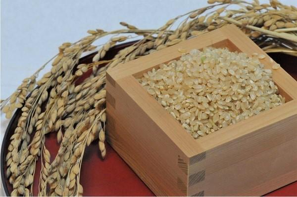 千葉県産エコ米 コシヒカリ玄米10kg