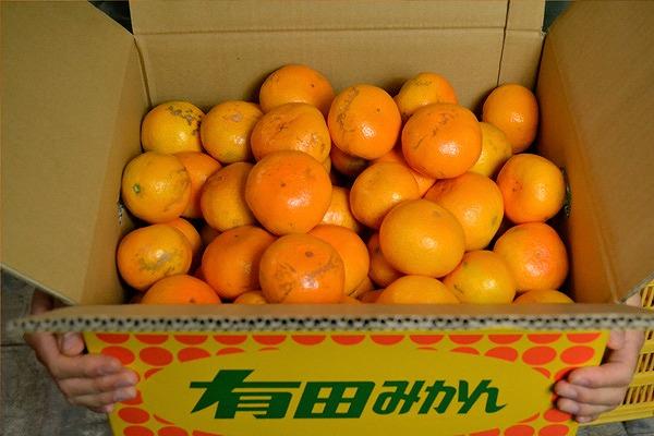 【先行予約】【ずっしり10kg】訳あり有田みかん