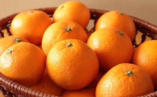 【厳選】有田産清見オレンジ約10kg(サイズおまかせ・秀品)