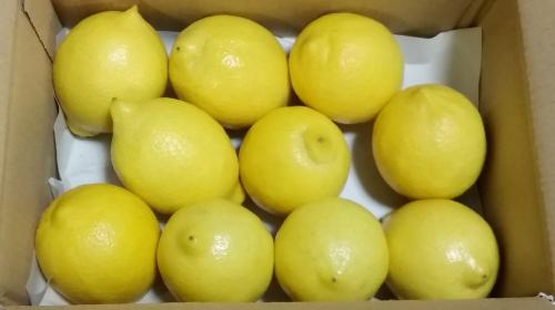 ★【月間20箱限定】皮まで美味しい無農薬レモン1.2㎏