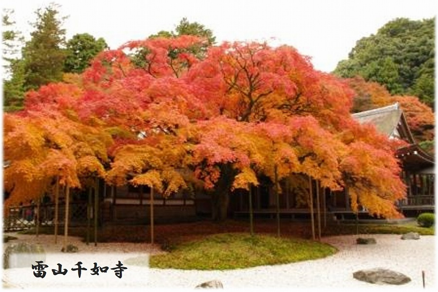 糸島市るるぶトラベルプランに使えるふるさと納税宿泊クーポン3,000円分