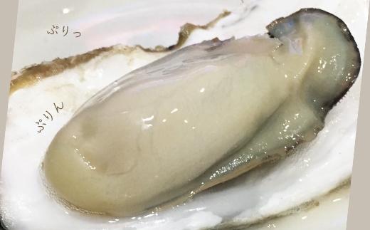 DD0122020年発送予約開始!海峡育ち「知内産殻付牡蠣22個入り」【上磯郡漁業協同組合】【3900pt】