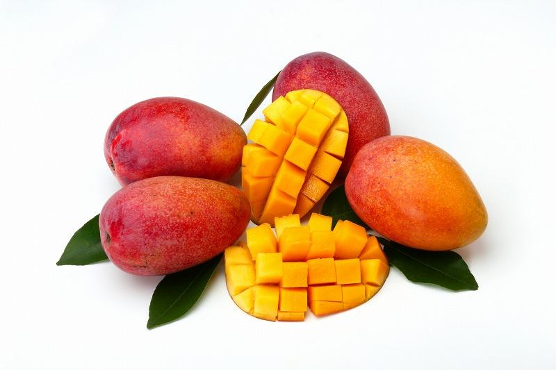 【2020年発送】特別栽培マンゴー1kg