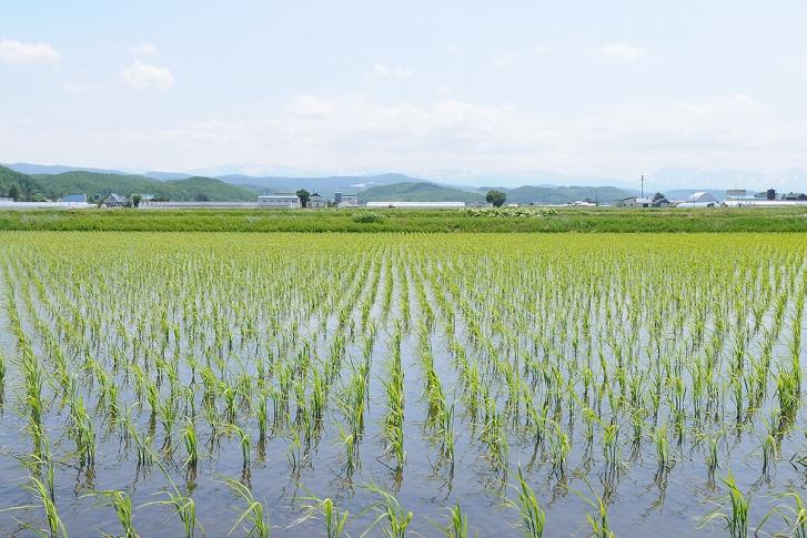 【期間限定】『白米』東川米「ななつぼし」10kg(2kg×5袋)
