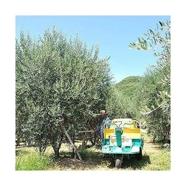 オリーブ園直送 香川県産100% 美容用オリーブオイル<なかよし>