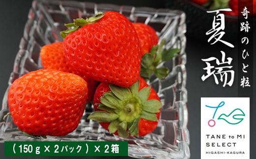 2021年分予約☆【夏イチゴ】奇跡のひと粒「夏瑞」4パックセット