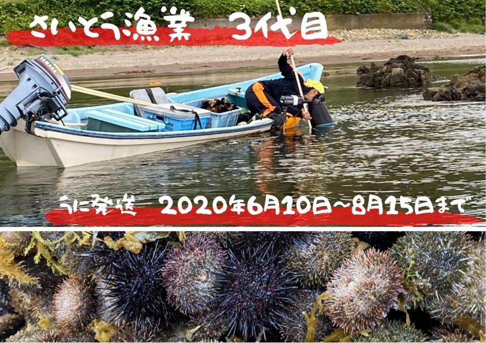 ●2020年夏予約発送●漁師直送!期間限定!塩水生ウニ食べ比べセット(無添加)
