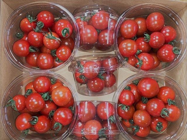 採れたてミニトマト【千果(チカ)】1.5kg×2ケース≪収穫当日~翌日発送≫