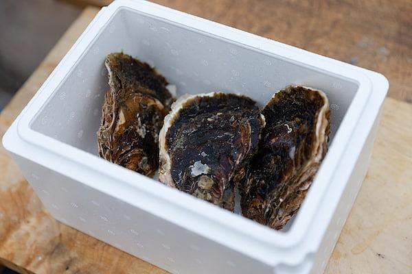 糸島漁協より発送!ぷりっぷり岩牡蠣2㎏