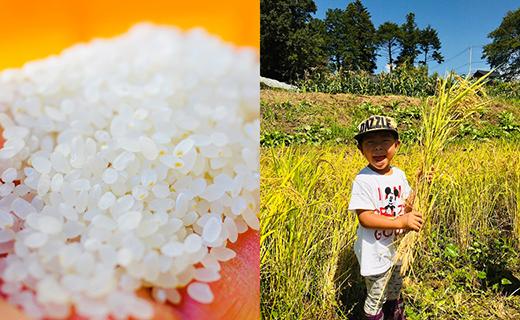 令和2年先行限定予約 北杜市産 コシヒカリ5㎏【特別栽培米】