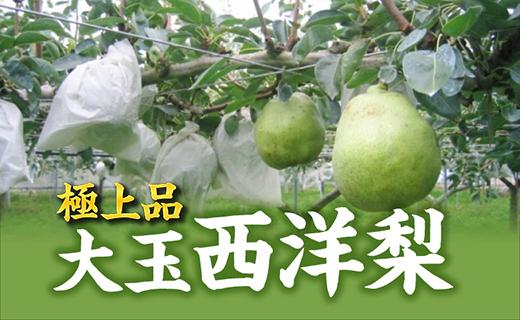 (2020年9月~配送開始)糖度14度以上の極上品 大玉西洋梨約1.5㎏(4~6個入)