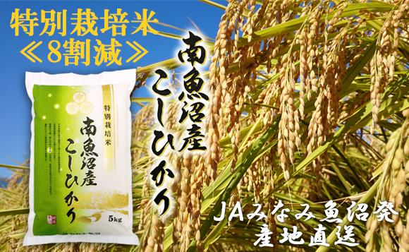 【令和2年産】選ばれた匠がつくる 特別栽培米南魚沼産こしひかり「8割減」5kg