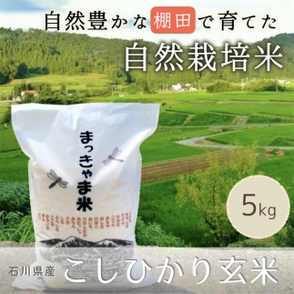 【特別栽培米】石川県産こしひかり棚田米【玄米】
