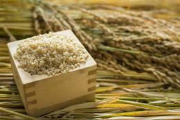 2018年秋収穫分福岡県産ヒノヒカリ【玄米】3kg