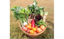 季節の野菜とオリジナル加工品の詰め合わせ
