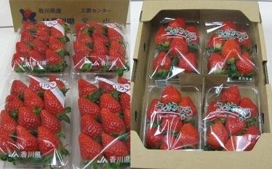 ※受付終了※【期間限定】三豊市産いちご食べ比べセット 約2kg