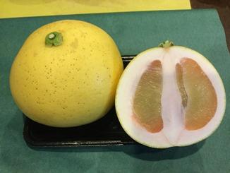 長崎産 訳アリ柑橘どっさり 10Kg詰め合わせセット