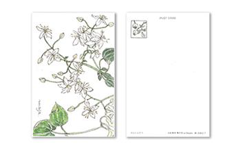 絵葉書セット『水彩散歩野の花inChoshi』