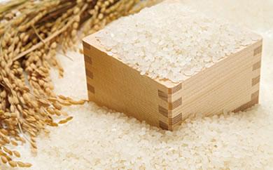 石見農園「蘭越米 ゆめぴりか10kg」