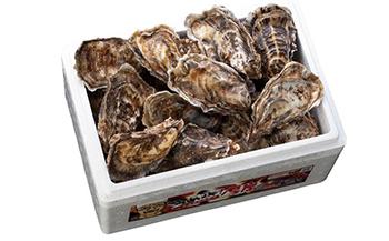 厚岸で1番人気の牡蠣「マルえもん10個セット」(2~3人用)