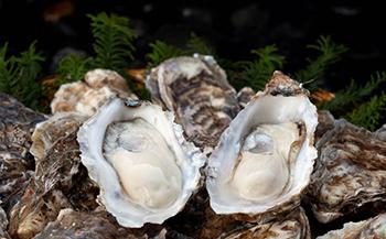 「厚岸で1番小さいのにスペシャルな牡蠣24個」