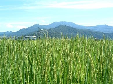 【令和01年産】JAみなみ魚沼の最高峰有機栽培米南魚沼産コシヒカリ10kg