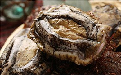利尻漁業協同組合「大きな毛ガニと小ぶりな天然あわびセット」