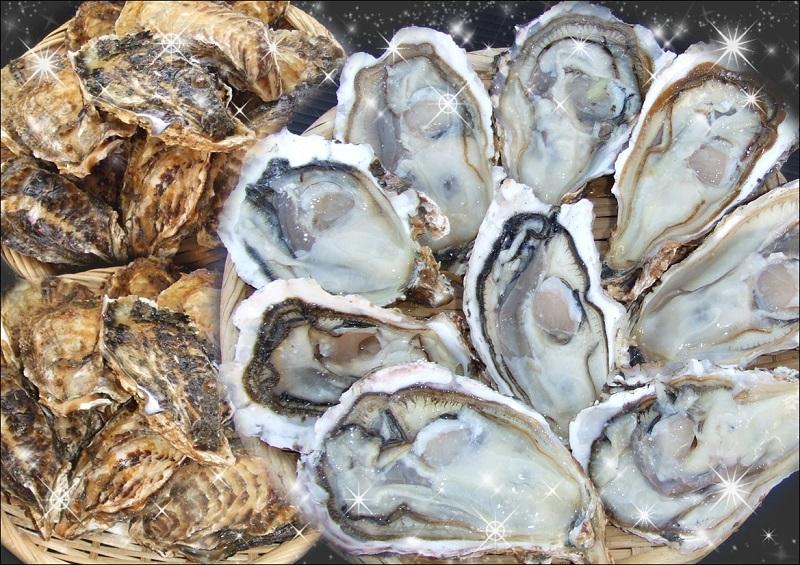 豊前海一粒牡蠣【大】3kg