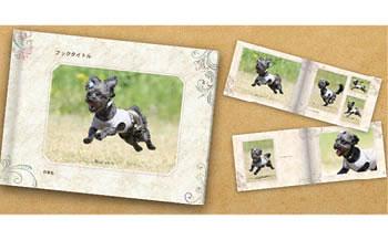 Cコース 元祖飛行犬写真家 的場信幸 出張飛行犬撮影5時間コース