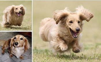 Fコース 飛行犬撮影データセット+飛行犬写真集1ページ協賛枠掲載権付き