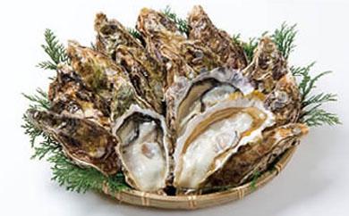 久美浜産殻付きカキ約65ヶ入り