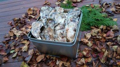 【数量限定500】殻付き牡蠣5kg 約40個~50個