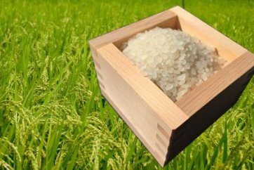 農薬を一切使わないお米10kg(新米)